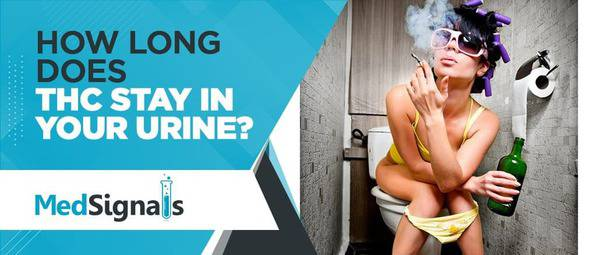 How long does THC stay in your urine - MedSignals